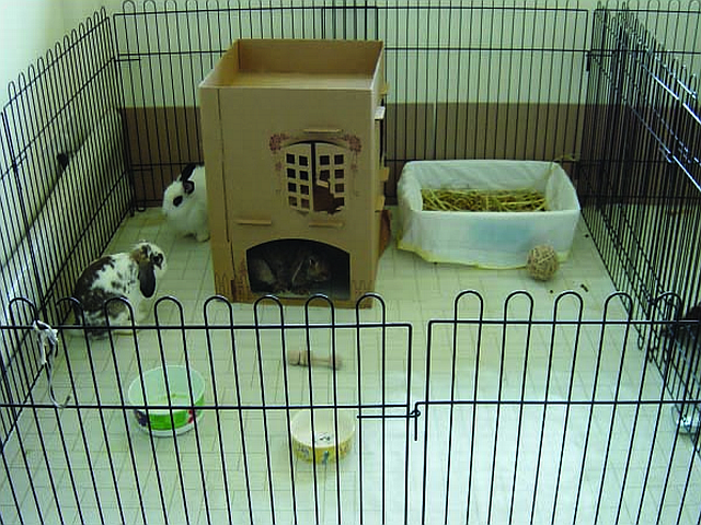 ideal rabbit housing Pet Advise: Living Environment together with Small Animal Housing (Rabbits)